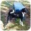 Photo 3 - Labrador Retriever Mix Dog for adoption in kennebunkport, Maine - Skipo-ADOPTED!
