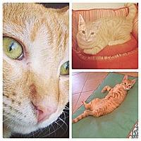 Adopt A Pet :: Garfield - Sunrise, FL