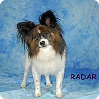 Adopt A Pet :: Radar - Ft. Myers, FL