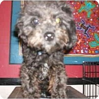 Adopt A Pet :: ROBIS PIERRE - SCOTTSDALE, AZ