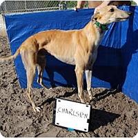 Adopt A Pet :: Charlston - N. BABYLON, NY