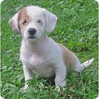 Adopt A Pet :: Zoe - Madison, WI