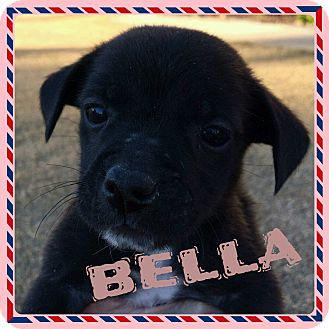 Rat Terrier/Terrier (Unknown Type, Small) Mix Puppy for adoption in Newnan, Georgia - Bella