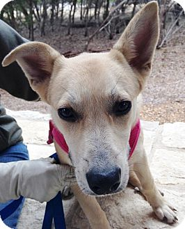 Shepherd (Unknown Type)/Terrier (Unknown Type, Medium) Mix Dog for adoption in Wimberley, Texas - Paloma
