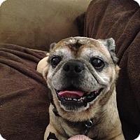 Adopt A Pet :: Bugs - Austin, TX