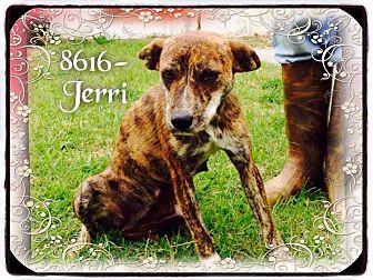 Carolina Dog Mix Dog for adoption in Dillon, South Carolina - Jerri