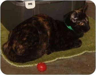 Domestic Shorthair Cat for adoption in Huntingdon, Pennsylvania - Luna