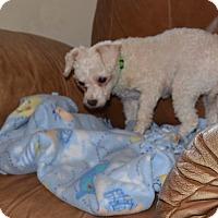 Adopt A Pet :: Payton - Prole, IA