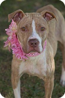Terrier (Unknown Type, Medium) Mix Dog for adoption in Flint, Michigan - Fredda - Adopted