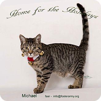 Domestic Shorthair Kitten for adoption in Riverside, California - Michael