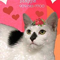 Adopt A Pet :: A Sweet Pair: MAGGIE & Chaplin - Monrovia, CA