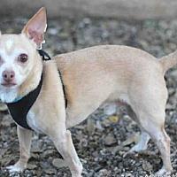 Adopt A Pet :: PANKO - Goleta, CA