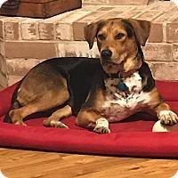 Adopt A Pet :: Fergie - Austin, TX