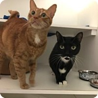 Adopt A Pet :: Pepper and Guy - Novato, CA