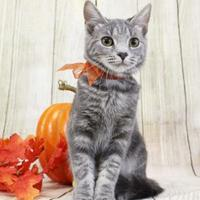 Adopt A Pet :: Fiora - Harrisonburg, VA