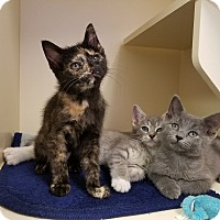 Adopt A Pet :: Minnie Callen & Sam - Elyria, OH
