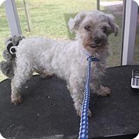 Adopt A Pet :: Snowflake - Bonifay, FL