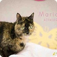 Adopt A Pet :: MARIAH - Aliquippa, PA