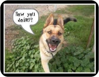 German Shepherd Dog Dog for adoption in Patterson, California - Max