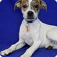 Adopt A Pet :: Jacob - Wichita, KS