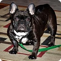 Adopt A Pet :: Bridget - Toronto, ON