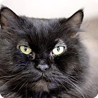 Adopt A Pet :: Quasi - Chicago, IL