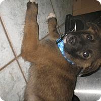 Adopt A Pet :: Brolee - Egremont, AB