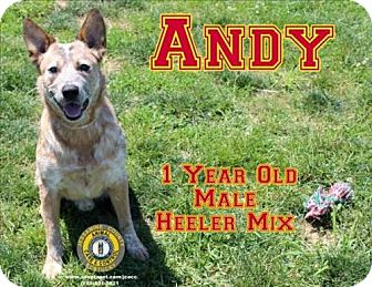 Adopt A Pet :: Andy  - Nicholasville, KY