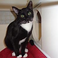 Adopt A Pet :: Keeter - Golden Valley, AZ
