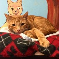 Domestic Shorthair/Domestic Shorthair Mix Cat for adoption in Redmond, Oregon - Rusty