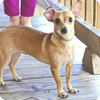 Adopt A Pet :: Chiquita - Spring, TX
