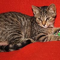 Adopt A Pet :: Sparrow - Marietta, OH