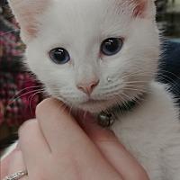 Adopt A Pet :: Banjo - Ogden, UT