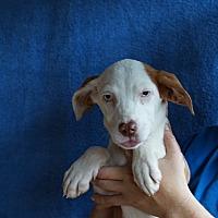 Adopt A Pet :: Moon - Oviedo, FL