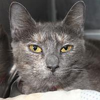Adopt A Pet :: WENDY - Clayton, NJ