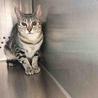 Adopt A Pet :: A030947 - Norman, OK