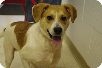 Beagle Mix Dog for adoption in Elyria, Ohio - Mutt