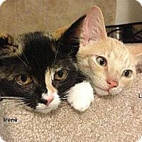 Adopt A Pet :: Leonard - Portland, OR