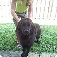 Adopt A Pet :: Loki - Wayne, NJ