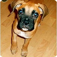 Adopt A Pet :: Cooper - Tallahassee, FL