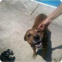 Adopt A Pet :: Keleaux - Geismar, LA