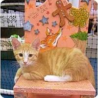 Adopt A Pet :: Captains Morgan and Kirk - Alexandria, VA