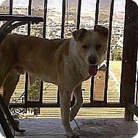 Adopt A Pet :: Sultan - San Ysidro, CA