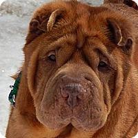 Adopt A Pet :: Ruby - Newport, VT