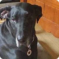 Adopt A Pet :: Sheena - Albuquerque, NM