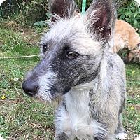Adopt A Pet :: Buds - Tumwater, WA