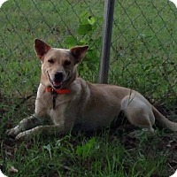 Adopt A Pet :: Sandy in Ct - Manchester, CT