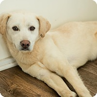 Adopt A Pet :: Tarin - East Smithfield, PA