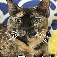 Adopt A Pet :: Temptest Female - Knoxville, TN