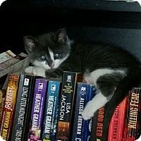 Adopt A Pet :: Dexter - Lindsay, ON